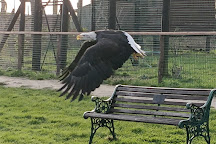 Eagle Heights Wildlife Foundation, Eynsford, United Kingdom