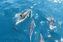 AK Wildlife Cruises, Falmouth, United Kingdom