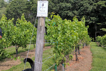 Black Bear Vineyard, Salisbury, United States