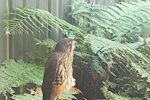 Wingspan National Bird of Prey Centre, Ngongotaha, New Zealand