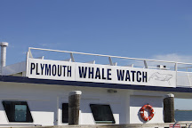 Plymouth Whale Watching, Plymouth, United States