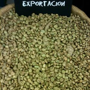 Orgäanika Perú Coffee (La Fontana) 6