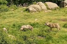 Loups de Chabrieres, Gueret, France