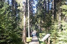 The nature trail. Rejviz - Mechova jezirka, Zlate Hory, Czech Republic
