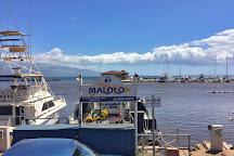 Malolo Molokini Snorkeling Tour, Maalaea, United States