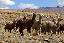Abra La Raya, Puno Region, Peru