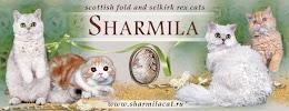 Sharmila, улица 26-я Линия, дом 17 на фото Ростова-на-Дону