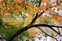 Webster Pond, Syracuse, United States