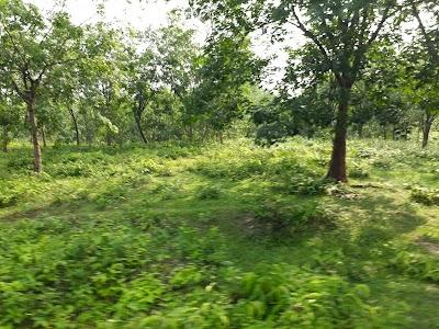 Radiant Garden, Chittagong, Bangladesh