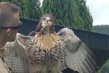 Falconry Ireland, Arklow, Ireland