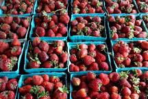 Webb City Farmers Market, Webb City, United States