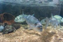 SeaQuarium, Rhyl, United Kingdom