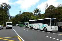 Tane Mahuta Walk, Opononi, New Zealand