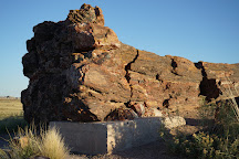 Giant Logs, Petrified Forest National Park, United States