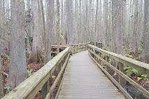 Highlands Hammock State Park, Sebring, United States
