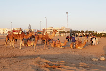 Lima Dromadaire, Essaouira, Morocco