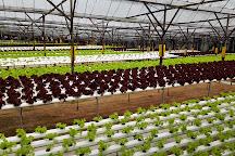 Big Red Strawberry Farm, Brinchang, Malaysia