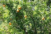 River Orange Garden, Pelling, India