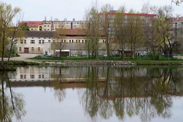 Prazelenina