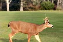 Ocean Shores Golf Course, Ocean Shores, United States