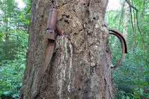 Old Bicycle in the Tree, Vashon, United States