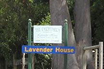 Lavender House The Perfumery, Rowella, Australia