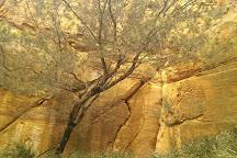 Waverley Flora Park, Mornington, Australia