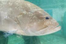 Life Fish Station - Porto Pim Aquarium, Horta, Portugal