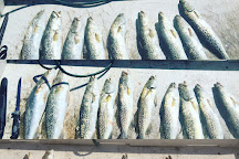 TNT Freedom Fishing Charters, Siesta Key, United States