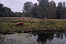 Hoornseplas, Haren, Holland
