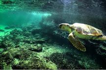 Centro di Recupero Tartarughe e Fauna Selvatica WWF, Lampedusa, Italy