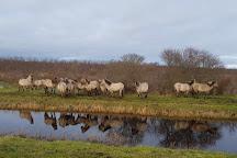 Nationaal Park Lauwersmeer, Lauwersoog, The Netherlands
