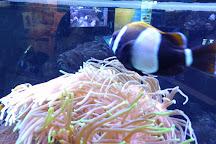 Solitary Islands Aquarium, Coffs Harbour, Australia