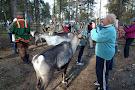 Inari Reindeer Farm