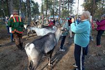 Inari Reindeer Farm, Inari, Finland