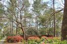 Azalea Park & Sculpture Garden