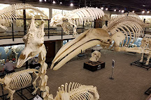 SKELETONS: Museum of Osteology, Oklahoma City, United States