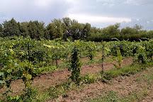 Granite Creek Vineyards, Chino Valley, United States