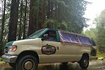 Redwood Sightseeing Tours, Crescent City, United States