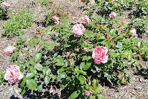 E.M. Mills Rose Garden, Syracuse, United States