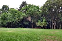Bosque Reinhard Maack, Curitiba, Brazil