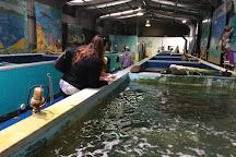 Stanley Seaquarium, Stanley, Australia