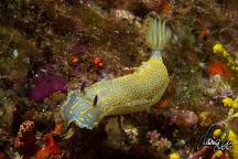 Stolli's Divebase, Tamariu, Spain