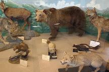 Museo Civico di Zoologia, Rome, Italy
