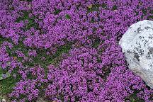 Glenavon Japanese Garden, Courtown, Ireland