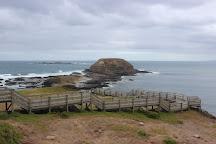 Dianne's Venture Tours, Phillip Island, Australia