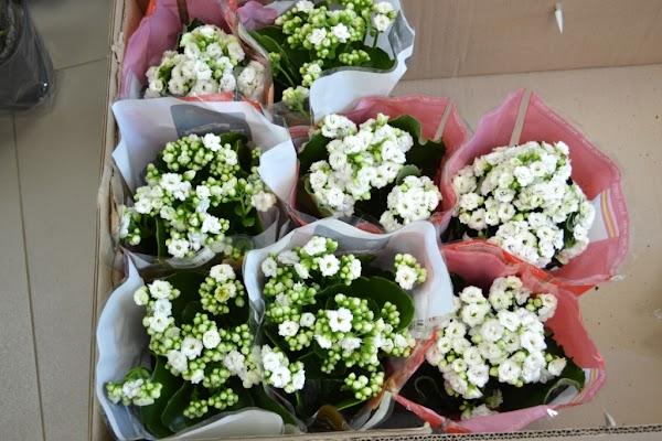 База, оптовая продажа цветов в сыктывкаре
