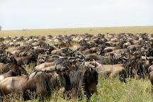 Bushwide African Safaris, Moshi, Tanzania
