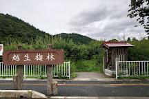Ogose Bairin, Ogose-machi, Japan