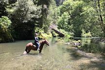 Crescent Trail Rides, Crescent City, United States